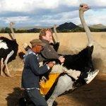 Ostrich rides are a highlight at Highgate !