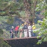 Zipline platform high in tree