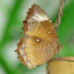 Природа Бали. В отеле бабочки летают