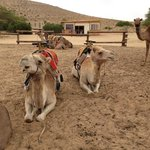 Our two camels