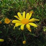 Flores em toda Puerto Varas