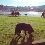 Lago Llanquihue e perros chilenos
