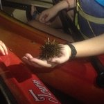 The youngest (8) holding a sea urchin!