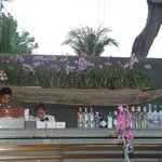 Terrace bar by the river