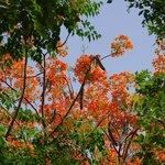 Fire tree