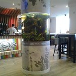 One of the tanks in the bar area .