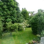 View of handkerchief tree from twin room (1)