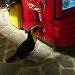 Feisty toucan.