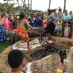 Luau pig coming out