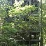 The 6-story treehouse!