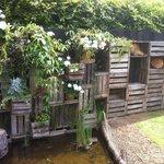 The chickens' garden