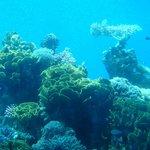 Кораллы на дне моря
