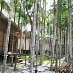 Plantation and rooms