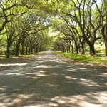Avenue lined with live oaks