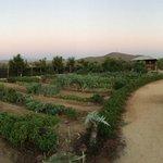 Garden at Hierbabuena