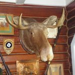 Moose Head in historic part of hotel