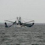 shrimp boats returning with dinner