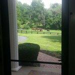 View from front door. Beautiful.