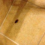 Roach Deceased