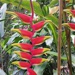 Botanical Tour C