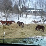 The horses greet you as you drive up to the cabins!