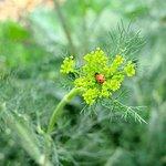 tiny ladybug