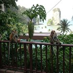 Morning visit from the wild life on our terrace.