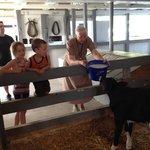 Guide Lydia feeding the newborn calf in the barn
