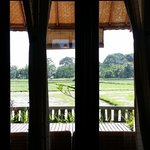 View from our window of Rice Fields