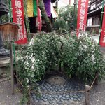 This hexagonal stone is the center of Kyoto.