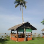 A hut built around a Coconut tree