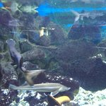 Alushta Aquarium