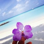 Orchid on the Beach