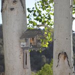 Foto de Willow Springs Motel & RV Park
