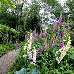 Regent's Park  - Queen Mary Gardens