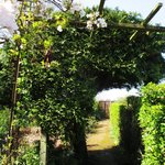 Wonderfully creative arch from tree, shrubs and vines