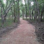 Ottine swamp trail