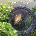 Fish caught in pond near hotel
