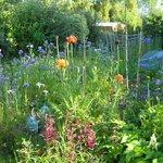 """les fleurs du jardin le matin au en sortant de la """"couette"""""""
