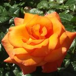 amzing floral display