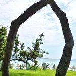Pinède séparant l'hôtel de la plage