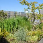 The Chester Beatty roof garden