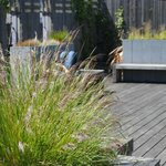 The Chester Beatty Library's roof garden