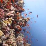 Риф и его жители