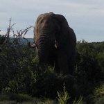 Very close to a very big elephant!