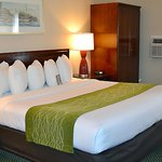 King-bedded guestrooms