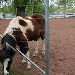 Farm: Pony