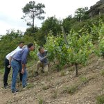 The Coteaux des Treilles is a stunning vineyard in Anjou that has a 70% slope