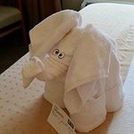 Towel art!