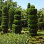 les coniferes